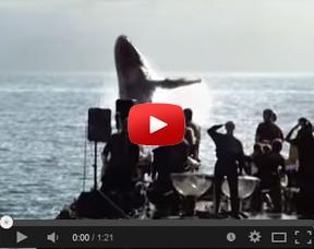miniwhale