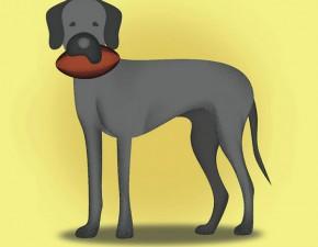 dog-site