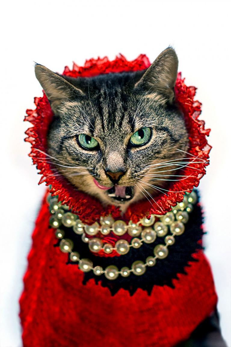 Фото кошек и мода