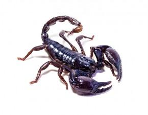 scorpiosite22