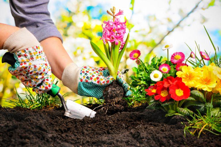 Когда в июне сажать цветы 268
