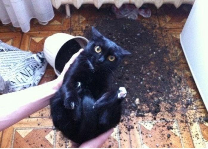 funny-tumblr-cats-40-5811ceb7e70d9__700