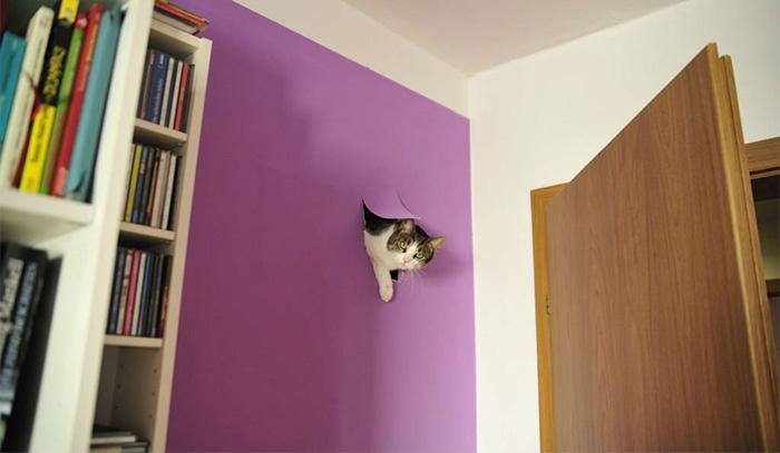 funny-tumblr-cats-6-5811ce5bcbaf0__700