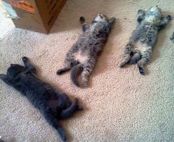 funny-tumblr-cats-61-5811f4834eeb3__700
