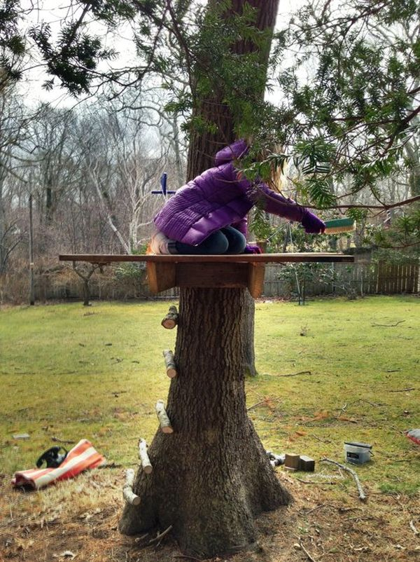 backyard-tree