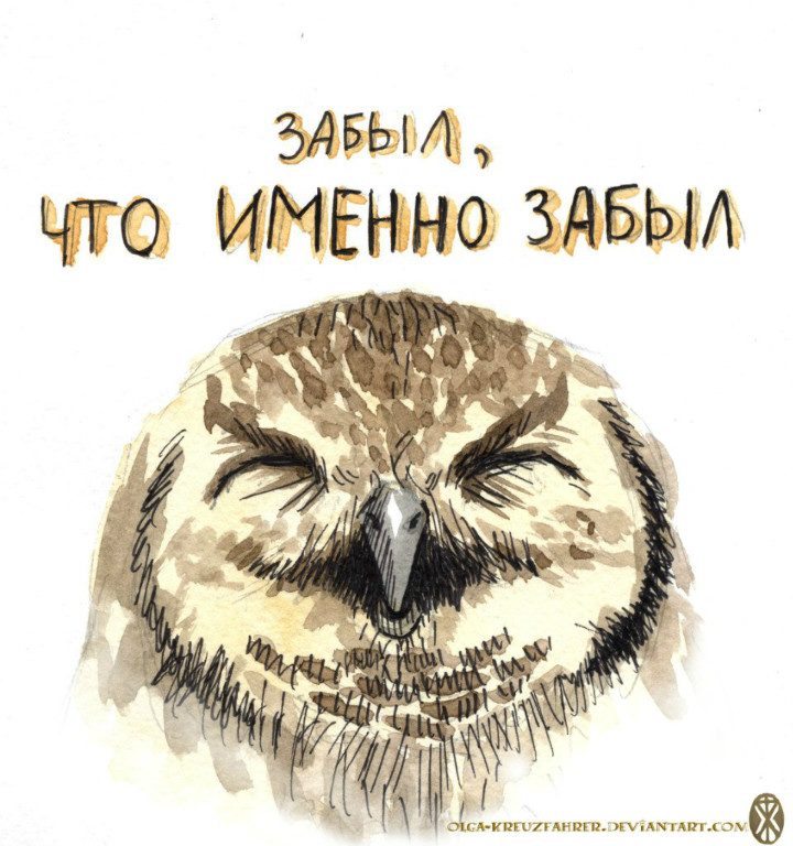owl01