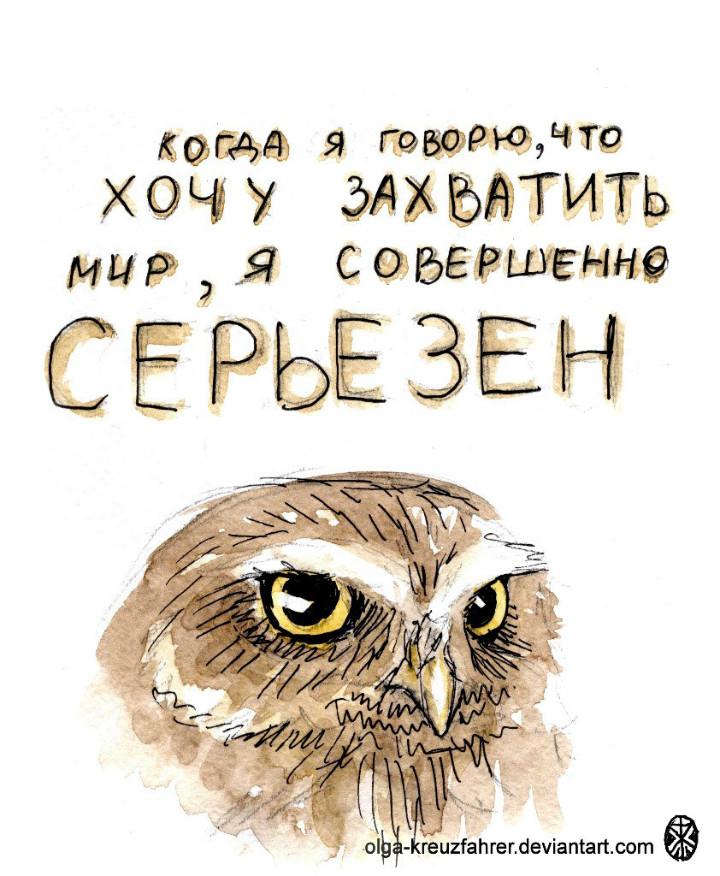owl06