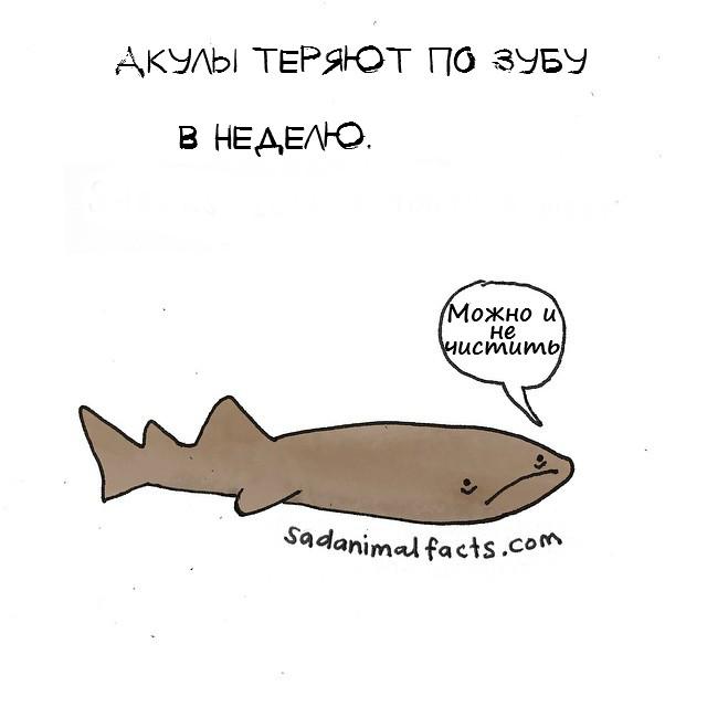 sad06