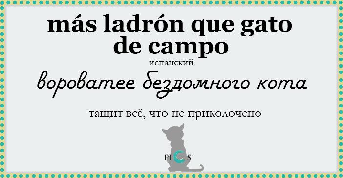 catidiom24
