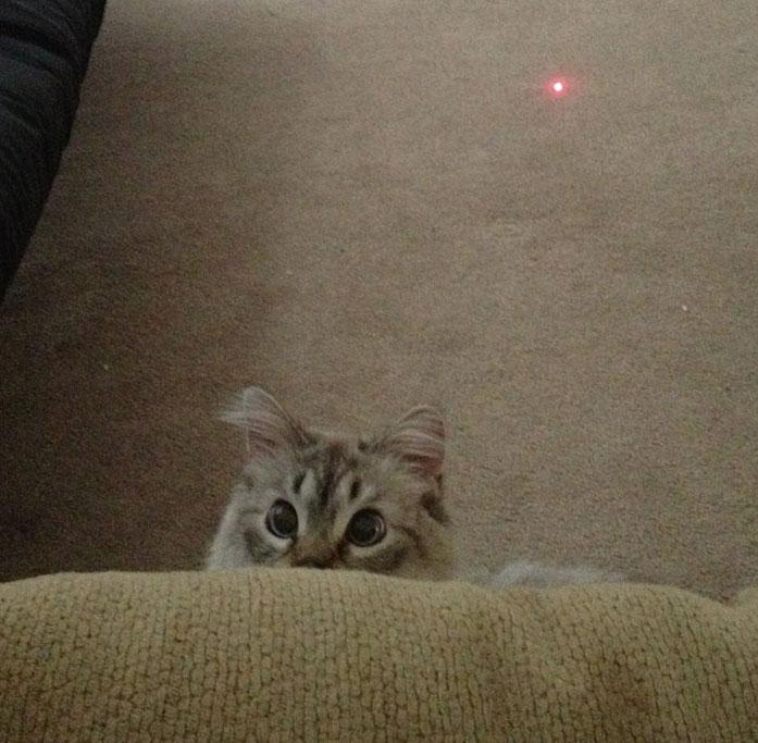 funny-tumblr-cats-51-5811ced50e020__700
