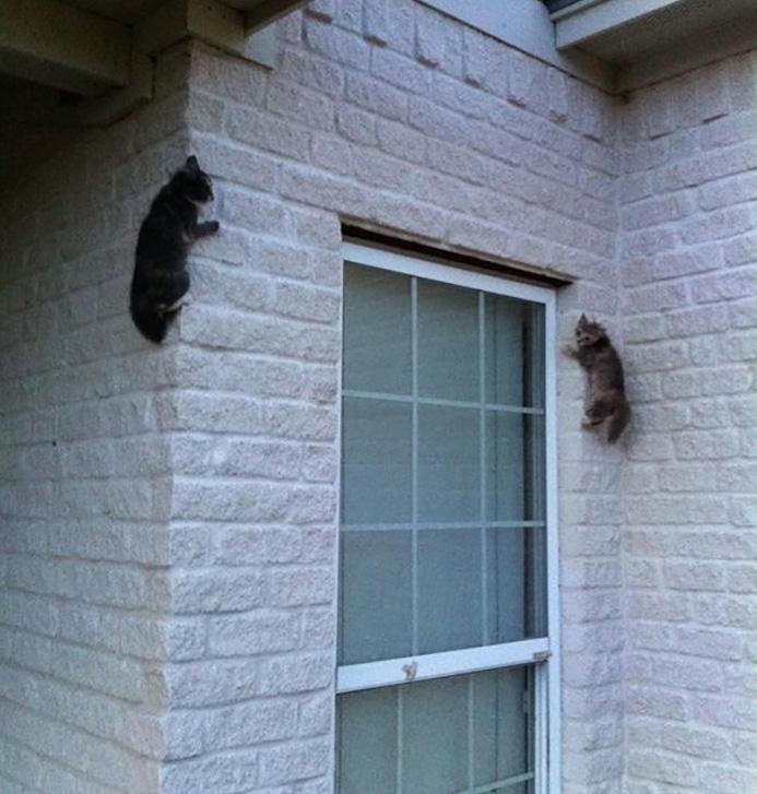 funny-tumblr-cats-53-5811f3c1bdcdd__700