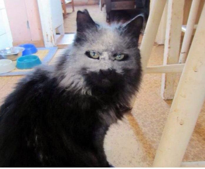 funny-tumblr-cats-54-5811f3db36a75__700