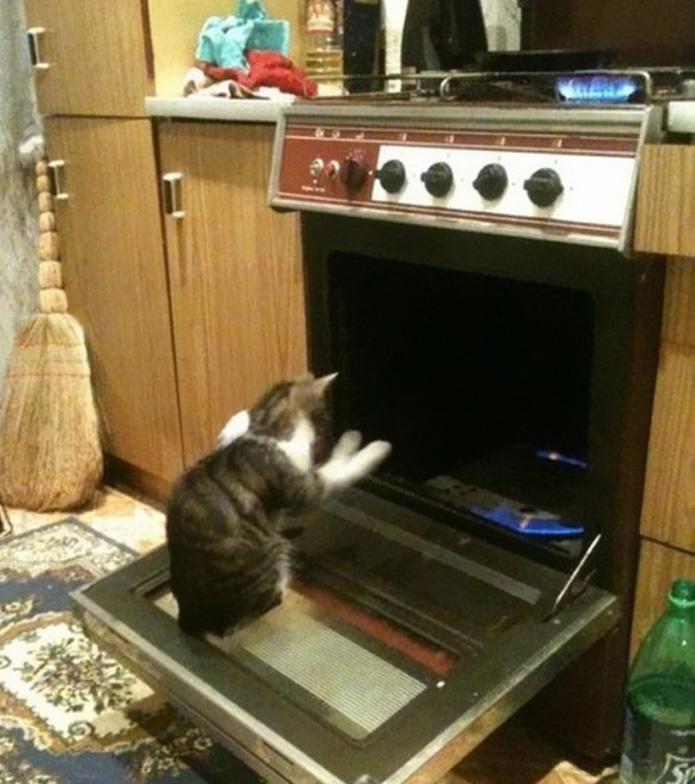 funny-tumblr-cats-58-5811f437dca49__700