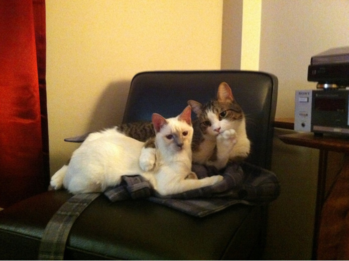 funny-tumblr-cats-60-5811f46c7dc11__700