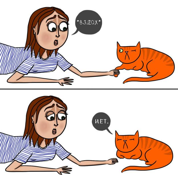 catsowner01