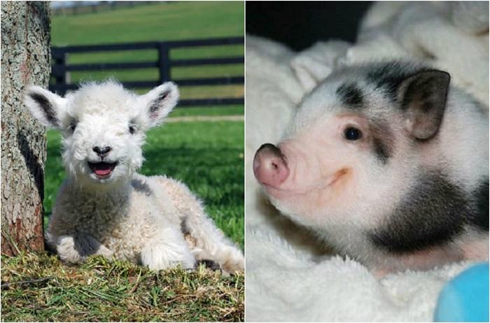 20 улыбающихся животных, которые умеют поднять настроение