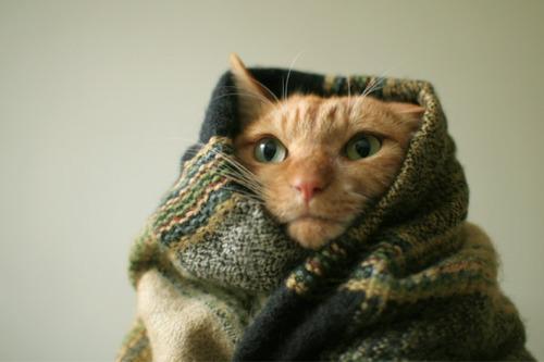 Пять психологических способов согреться в самый холодный день
