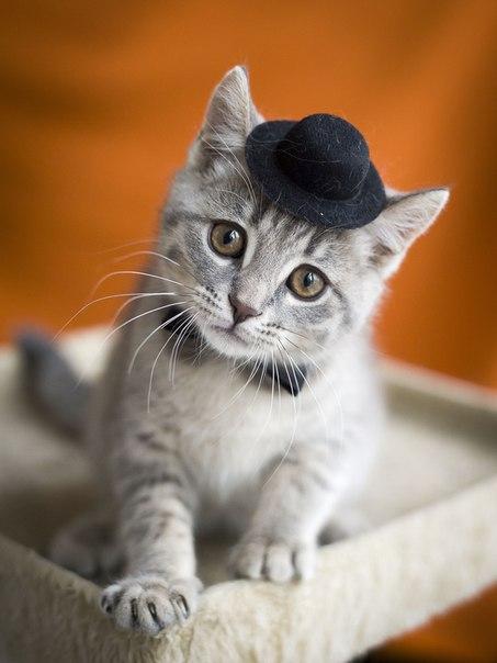 Котик Чарли