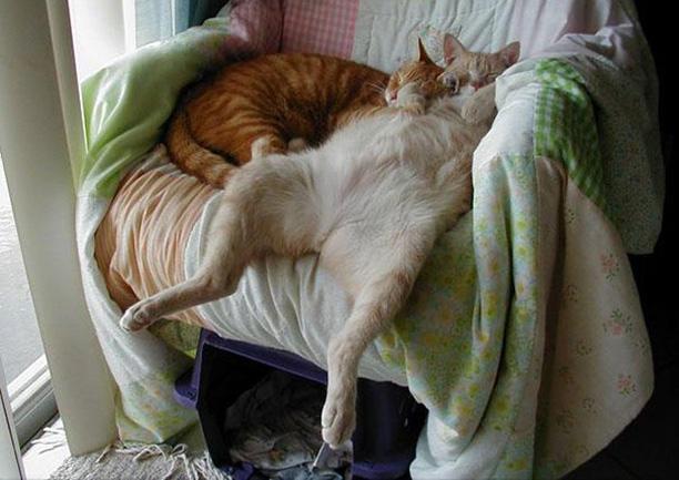 funny-sleeping-cats-20